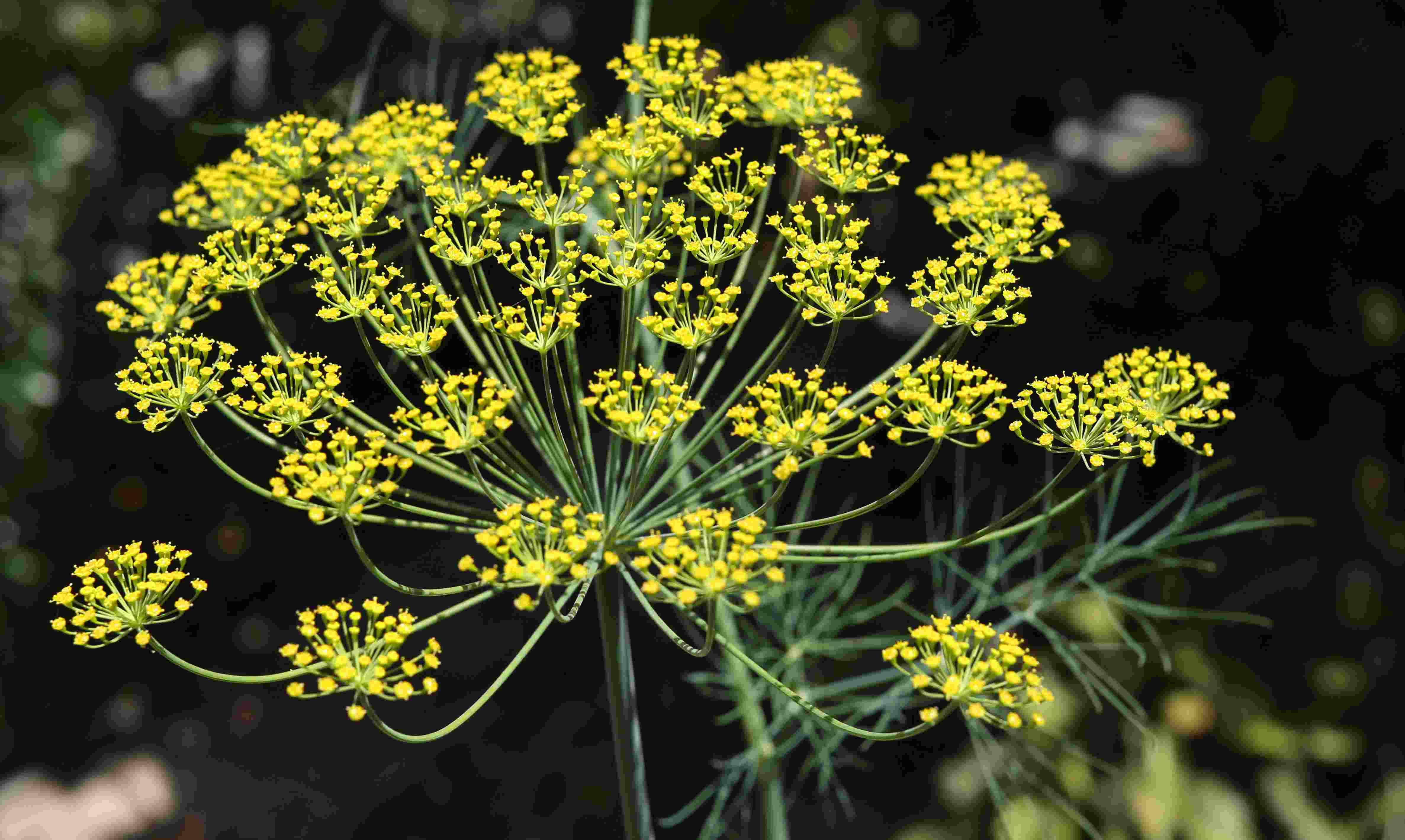 Antispasmodic-Herbs-Title-photo (1)