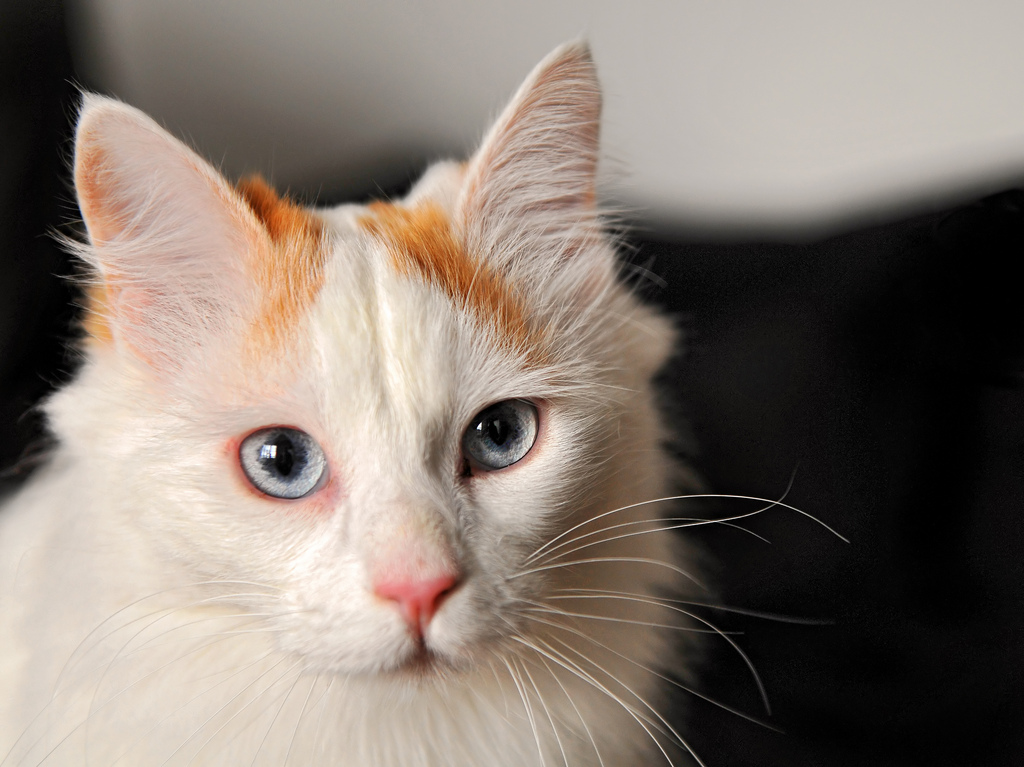 HAIRBALLS: IS YOUR CAT SPITTING OUT WAY TOO MANY OF THEM?